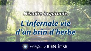 [Histoire] L'infernale vie d'un brin d'herbe
