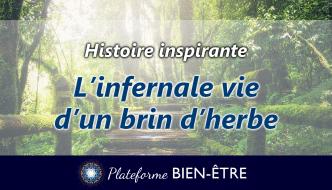 histoire-infernale-vie-brin-herbe